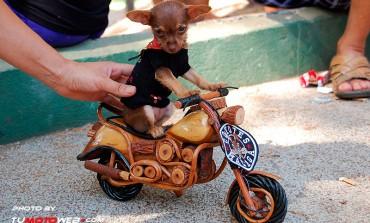 Los Perros también sienten la pasión de ser Motoristas..!!
